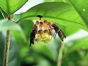 ★ 蜂の巣 [2-2] ★